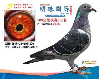 2019武威明珠355