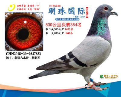 2019武威明珠354
