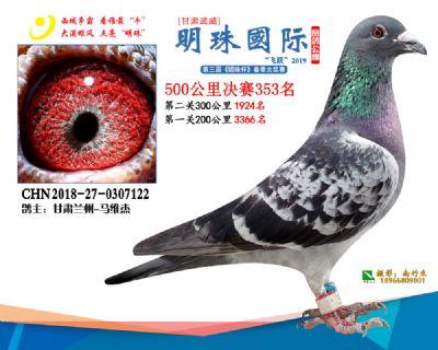 2019武威明珠353