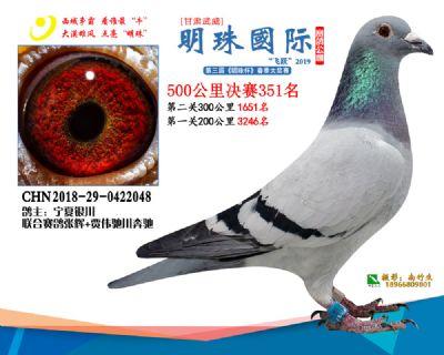 2019武威明珠351