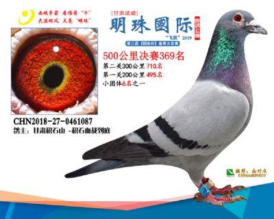 2019武威明珠369