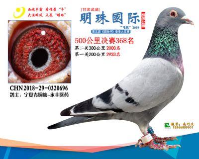 2019武威明珠368
