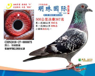 2019武威明珠367