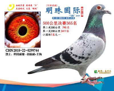 2019武威明珠365