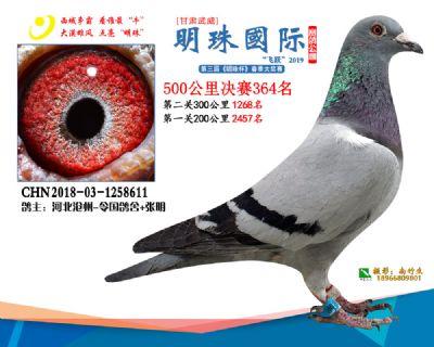 2019武威明珠364