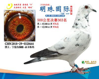 2019武威明珠363