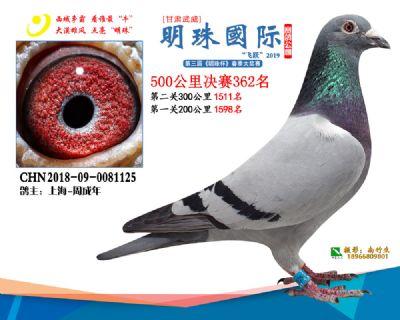 2019武威明珠362