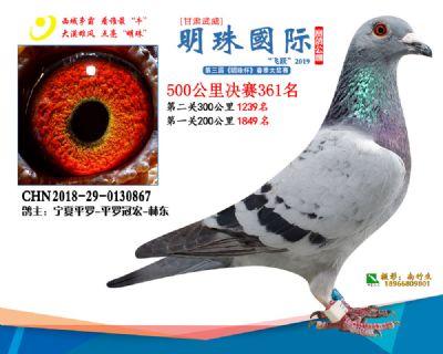 2019武威明珠361
