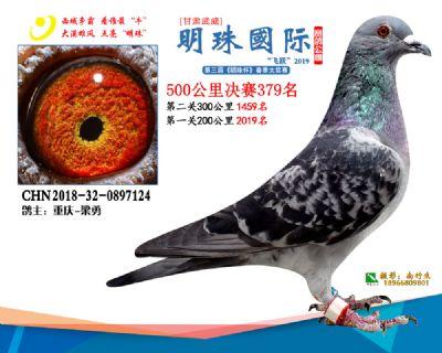 2019武威明珠379