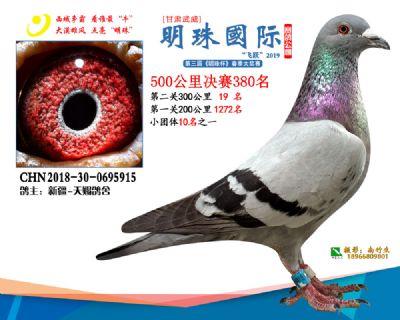2019武威明珠380