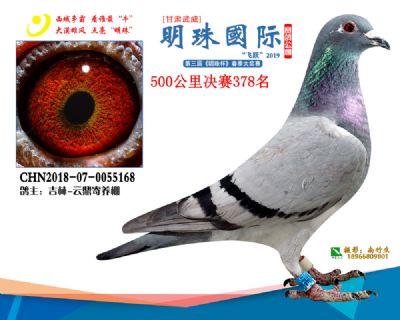 2019武威明珠378
