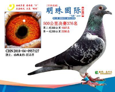 2019武威明珠376