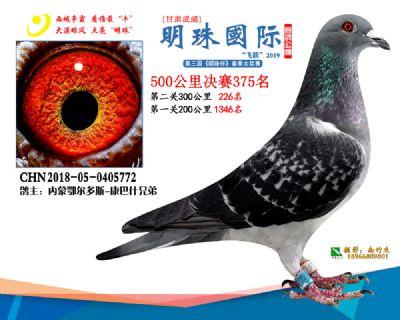 2019武威明珠375