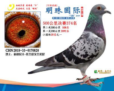 2019武威明珠374