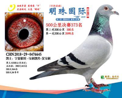 2019武威明珠373