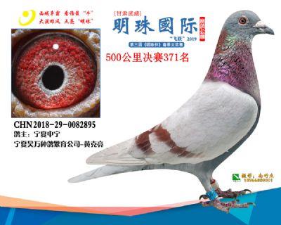 2019武威明珠371