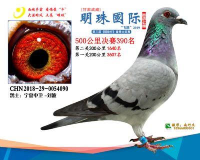 2019武威明珠390