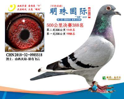 2019武威明珠388