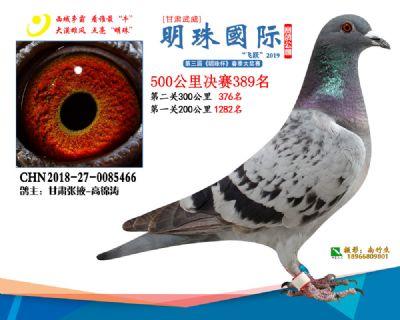 2019武威明珠389