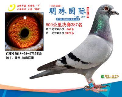 2019武威明珠387