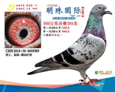 2019武威明珠385