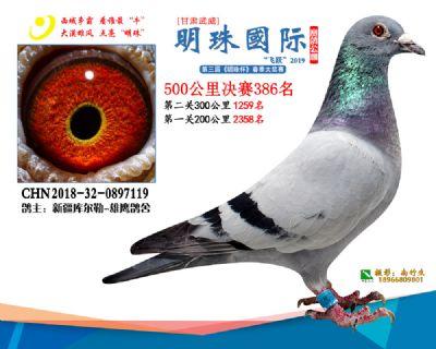 2019武威明珠386