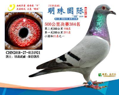 2019武威明珠384