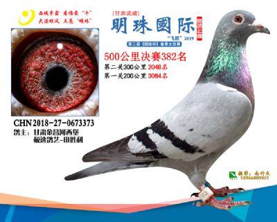 2019武威明珠382