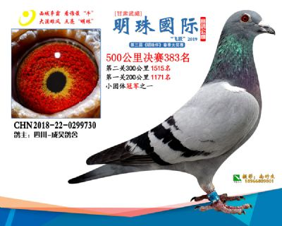 2019武威明珠383