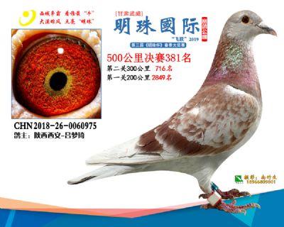 2019武威明珠381