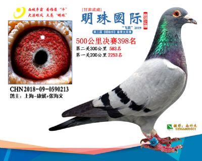 2019武威明珠398
