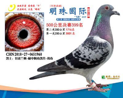 2019武威明珠399