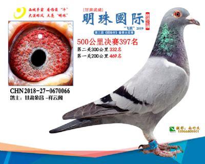 2019武威明珠397