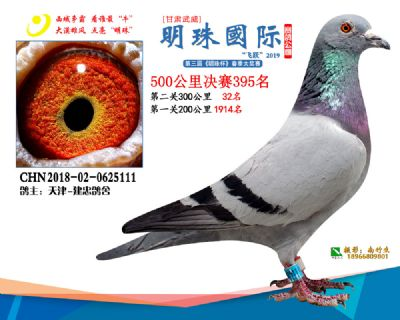 2019武威明珠395
