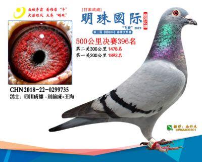 2019武威明珠396