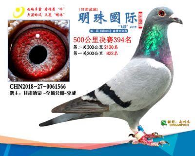 2019武威明珠394