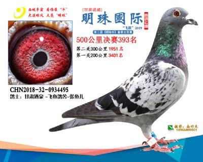 2019武威明珠393