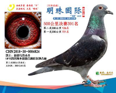 2019武威明珠391