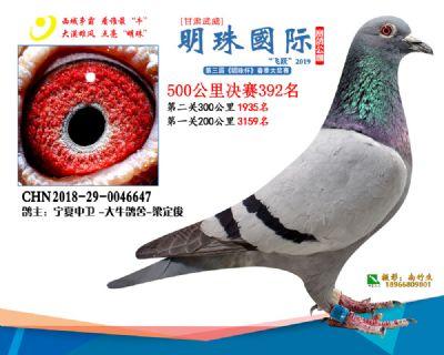 2019武威明珠392