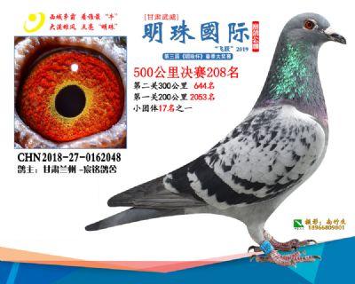 2019武威明珠208