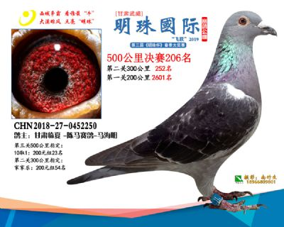 2019武威明珠206