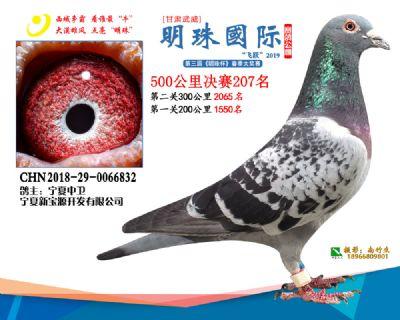 2019武威明珠207