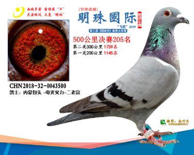 2019武威明珠205
