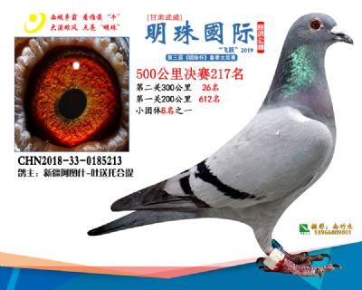 2019武威明珠217