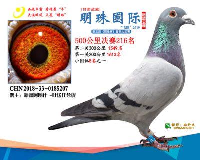 2019武威明珠216