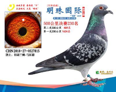 2019武威明珠230