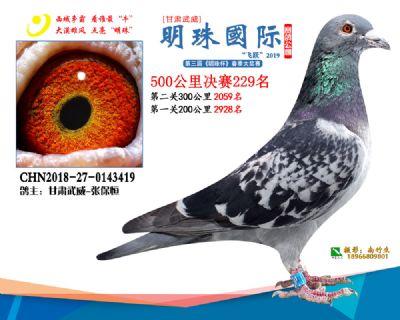 2019武威明珠229