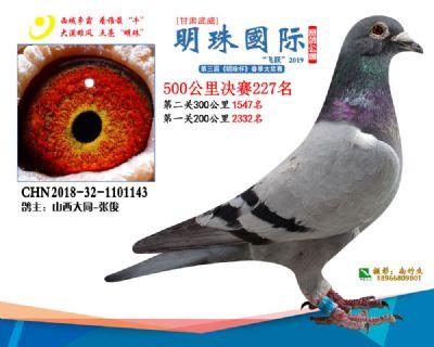 2019武威明珠227