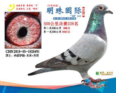 2019武威明珠226