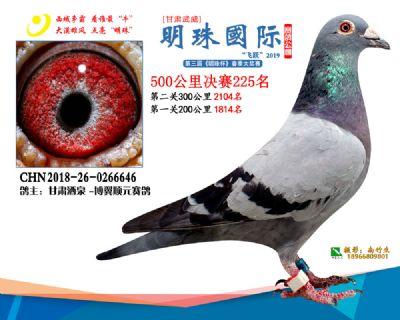 2019武威明珠225